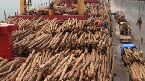 export log markets | interest co nz